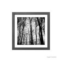 Quadro-decorativo-Trees-Black-33x33cm-cinza-Infinity