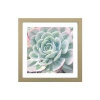 Quadro-decorativo-My-Garden-II-33x33cm-zebrano-Infinity